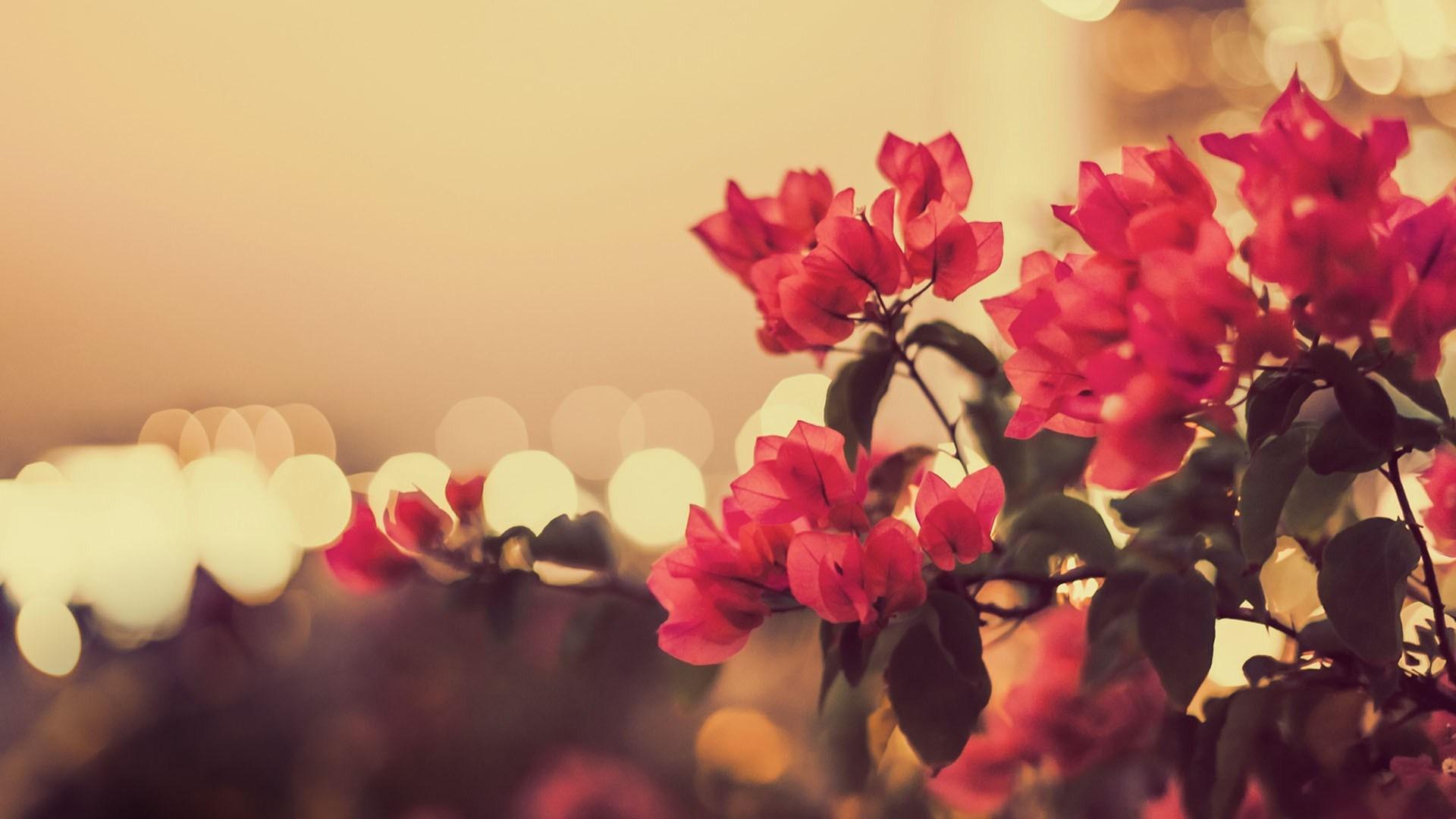 زیباترین+عکس+ها