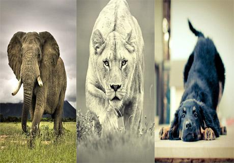 عکس ههای حیوانات برای پس زمینه ی موبایل